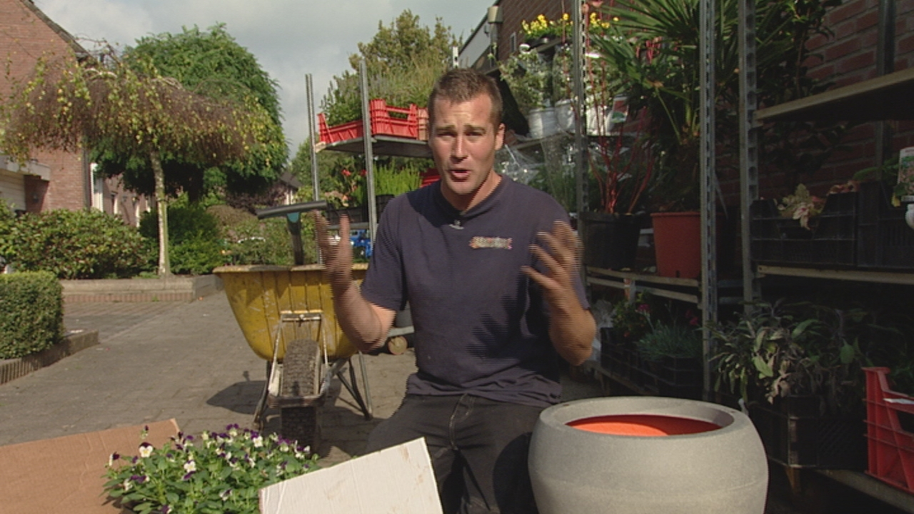 Etagebeplanting bloembollen - PlantPlezier.nl