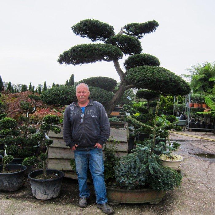 Nobilis, exclusieve tuinbeplanting - PlantPlezier.nl