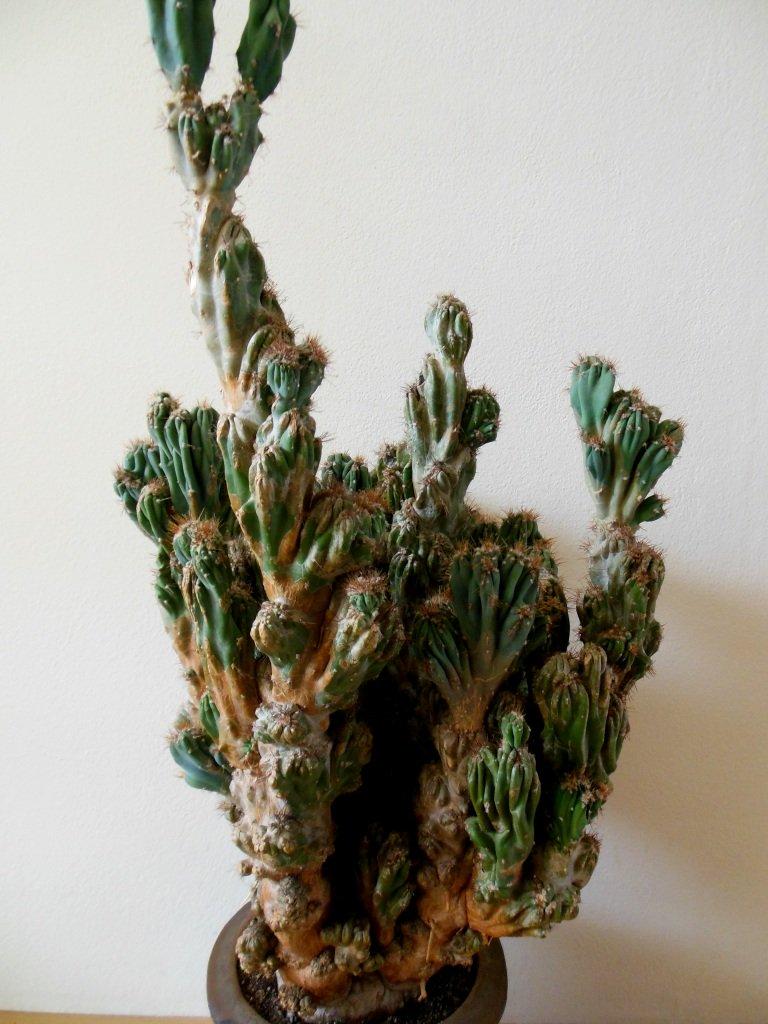 plantenasiel - rachelle - plantplezier - ivo - spotlights