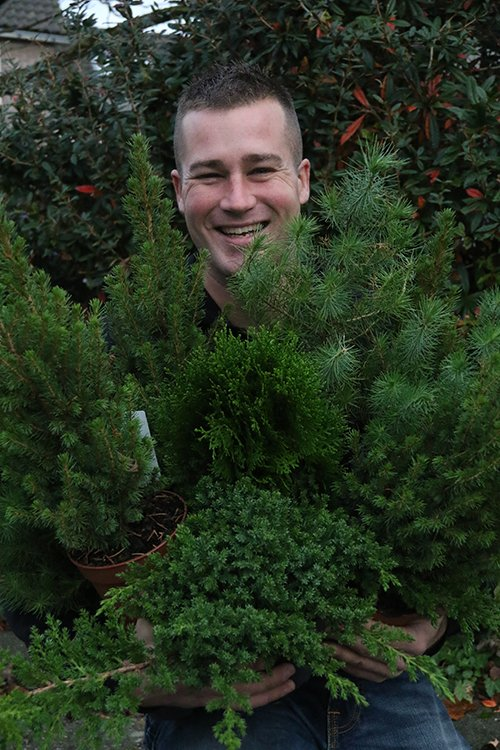 Kerst - ivo - plantplezier - miniboompjes - kerstboom - bloeier - maand