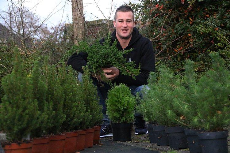 Tuinplant van de maand december: miniboompjes - PlantPlezier.nl
