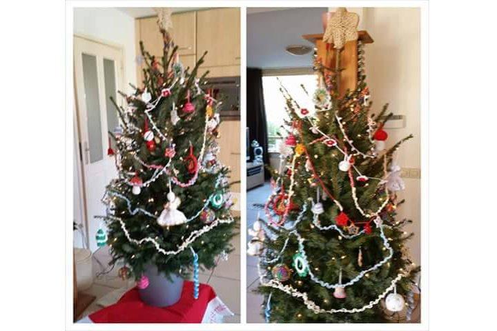 Trots op mijn kerstboom - PlantPlezier.nl