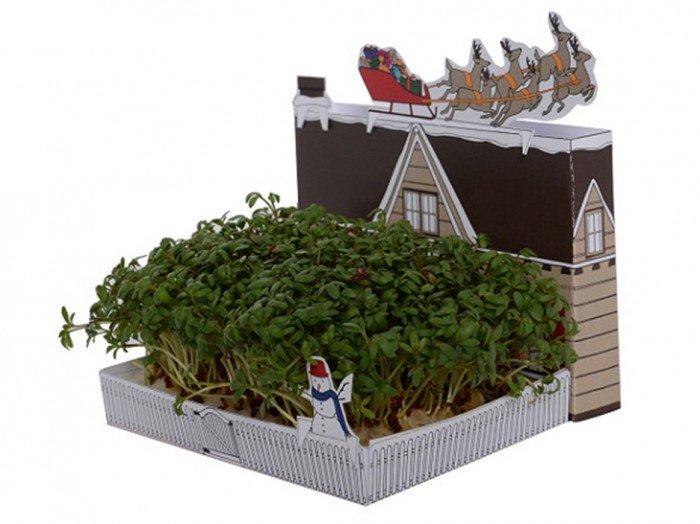 Een 'groene' kerstkaart - PlantPlezier.nl