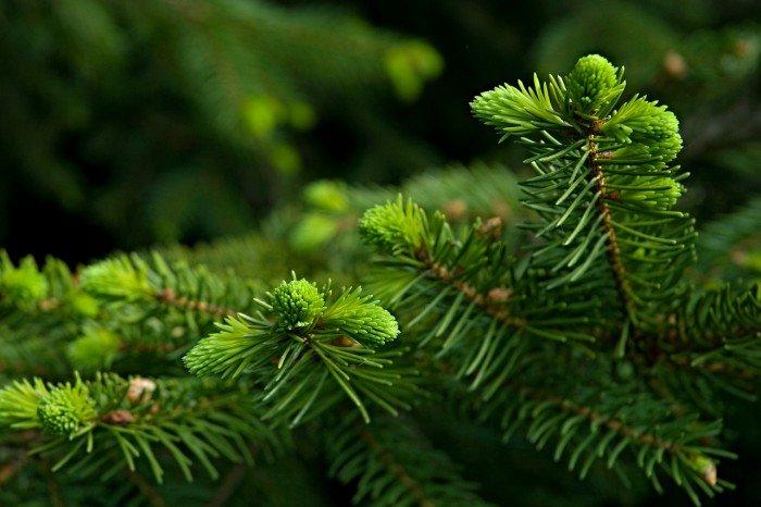 Easyfix Kerstboom standaard - PlantPlezier.nl