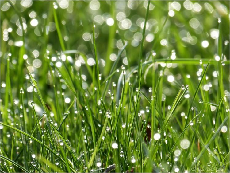 Gras kalken - PlantPlezier.nl