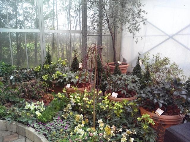 helleborusdagen - agenda - plantplezier