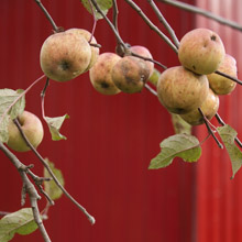 agenda - vrolijke noot - fruitbomen - verkoop - plantplezier