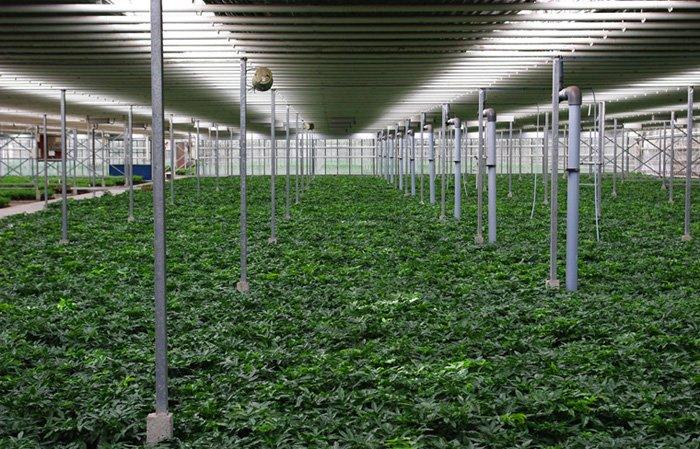 Scheffers - Kwekerij Zeurniet - Plantplezier - Groene Spotlights