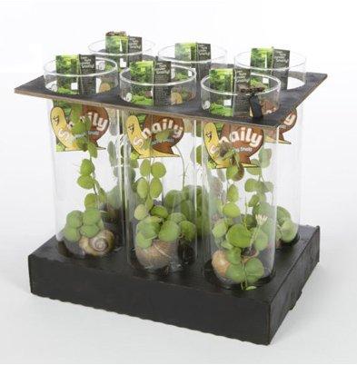 groene spotlights - zeurniet - jos scheffers - snaily - plantplezier
