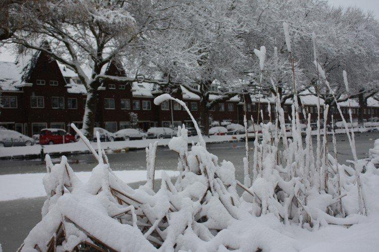 Sneeuw - PlantPlezier.nl