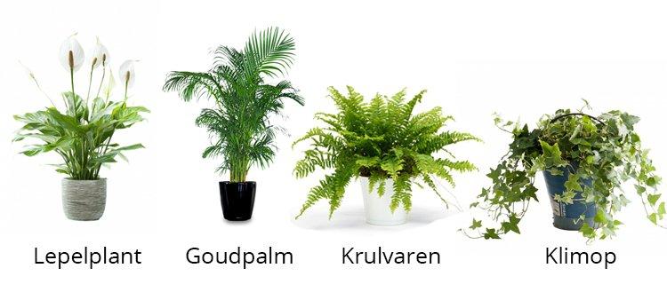 luchtzuiverende planten - plantplezier