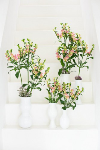 spotlights - alstroemeria - charmelia