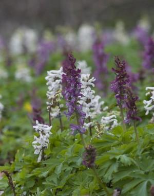 plantplezier - agenda -