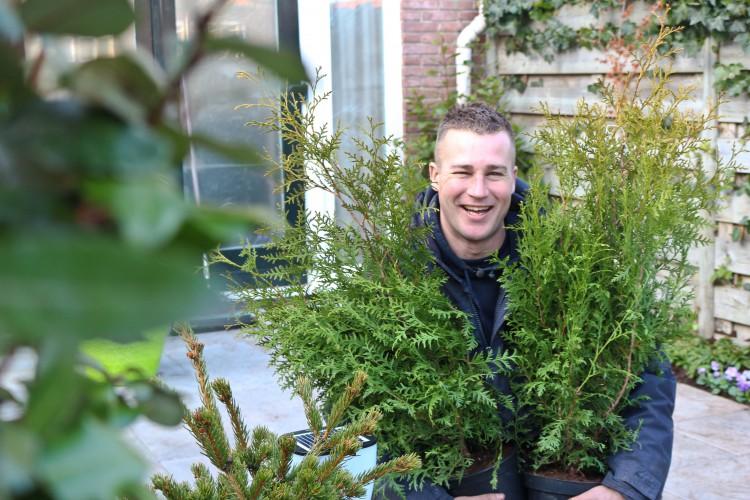 Tuinplant van februari: de Thuja - PlantPlezier.nl