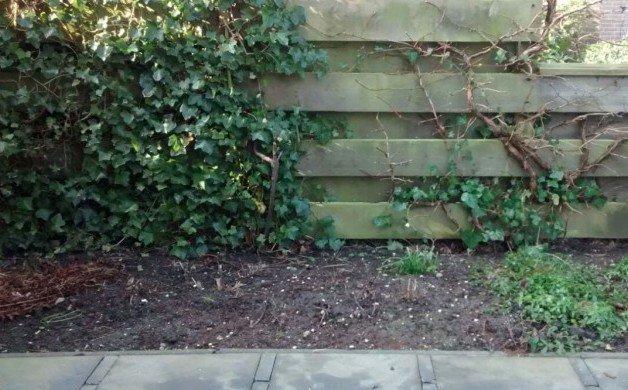 Kritisch naar je tuin kijken - PlantPlezier.nl