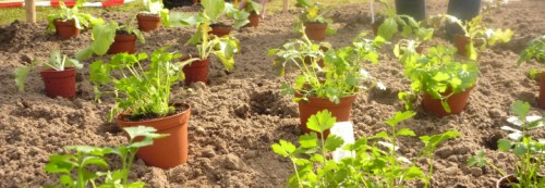 Workshop-Moestuinieren