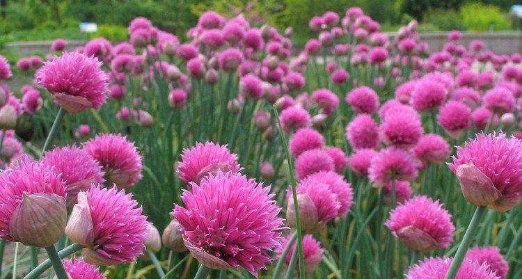 agenda - plantplezier - voorjaarsweekend - eetbare tuin