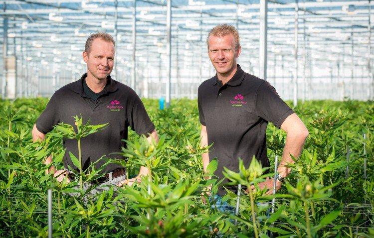 Award winnaar: Alstroemeria Charmelia - PlantPlezier.nl