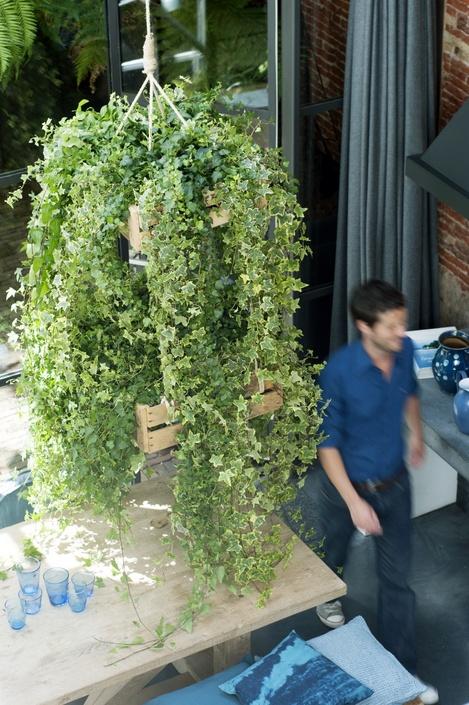 hangplant - hedera - plant van de maand - april