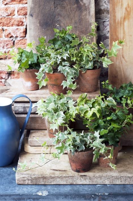 plantplezier - plant van de maand - april