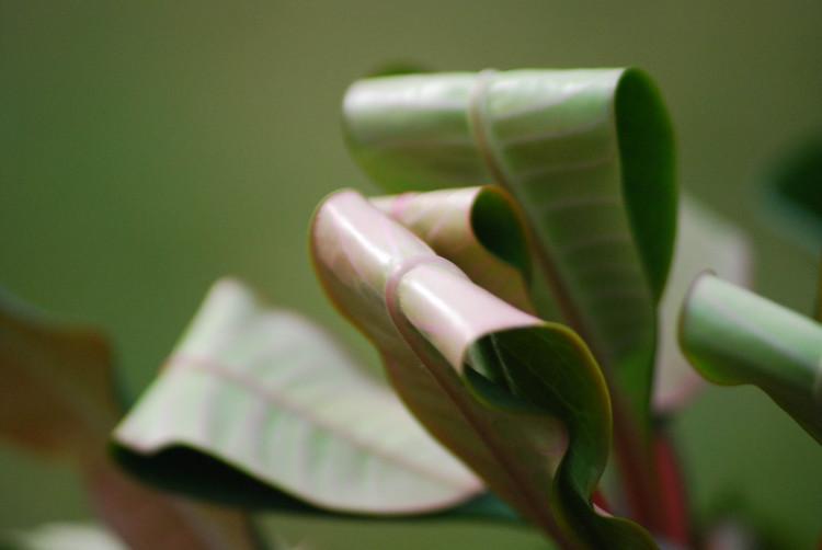 Een stofetende plant (NIEUW!) - PlantPlezier.nl