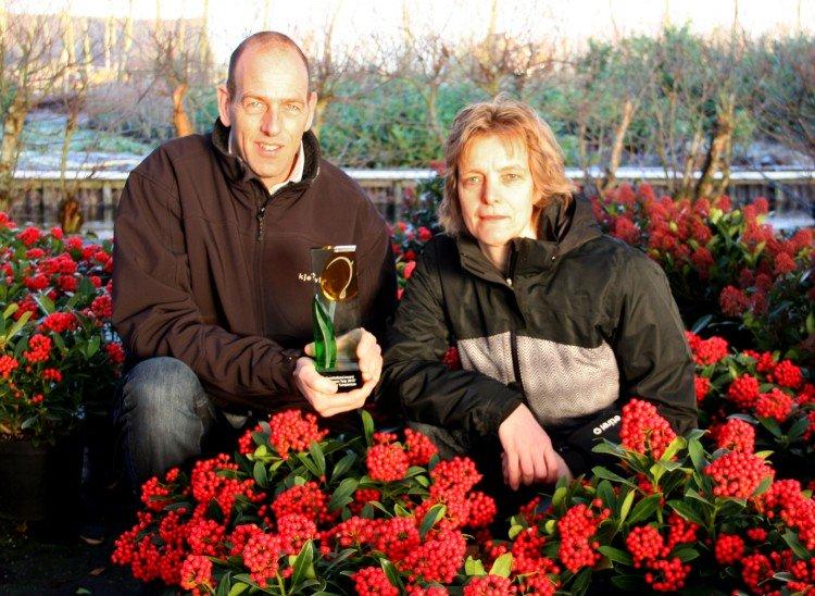 Award winnaar: Skimmia japonica 'Pabella' - PlantPlezier.nl
