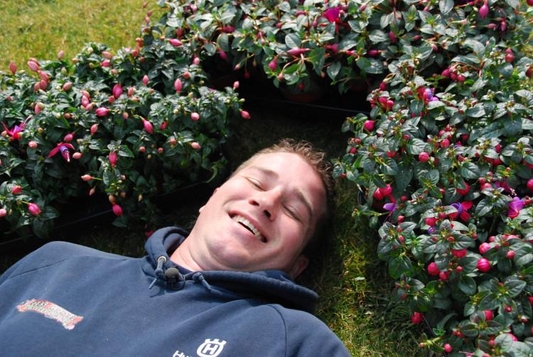 PlantPlezier - tip - tuinbloeiers - fuchsia