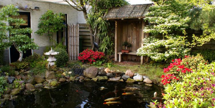 plantplezier - trots op - japanse tuin