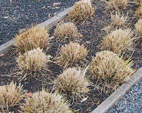 hoe grassen snoeien