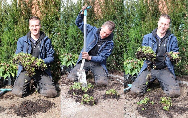 Nu is een moment om planten te scheuren - PlantPlezier.nl