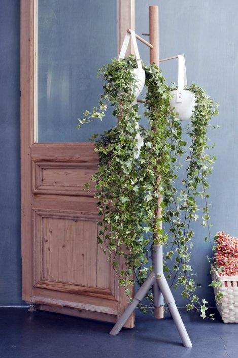 klimop - woonplant - april
