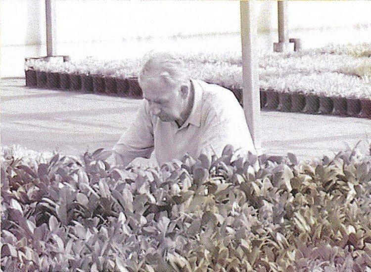 Skimmia - Pabella - Plantplezier - award - Glazen Tulp