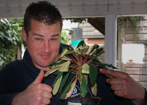 plantplezier - stofetende plant - ivo