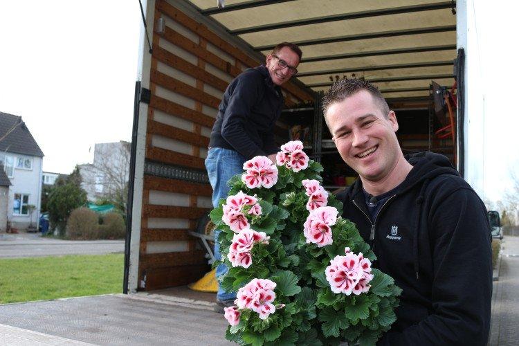 Pelargonium grandiflorum, onze Franse Geranium - PlantPlezier.nl