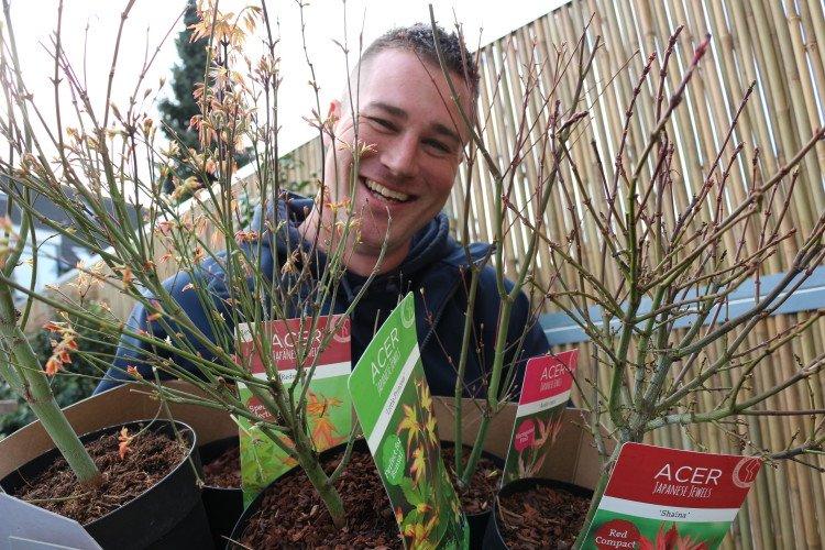 Japanse Esdoorns (Acer Japanese Jewels) - PlantPlezier.nl
