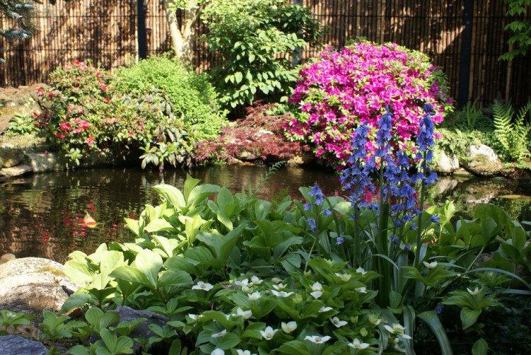 plantplezier - trots op - japanse tuin - vijver