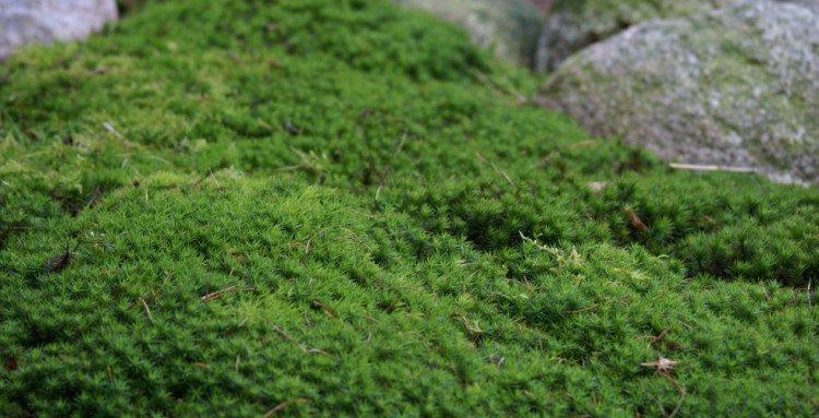mos - japanse tuin - plaatplezier