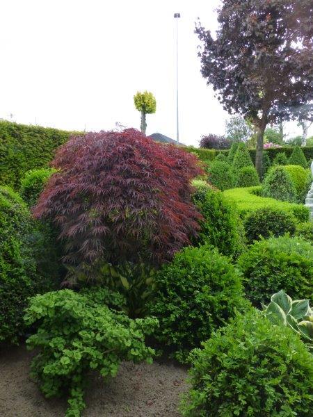 buxus - esdoorn - plantplezier