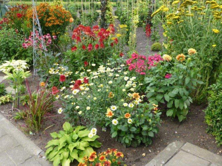buxus - trots op je tuin - plaatplezier