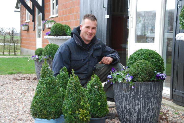 Buxus - PlantPlezier.nl