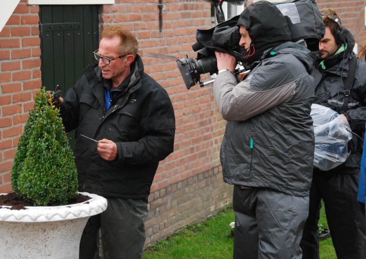 Tuinplant van de maand april: Buxus 'jeans of garden' - PlantPlezier.nl