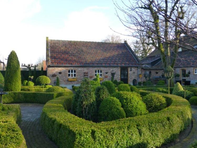 buxus - tuin - trots op je tuin - plaatplezier