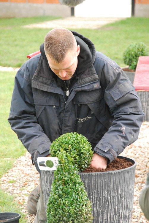 ivo - plantplezier - tuinplant - busxus - april -