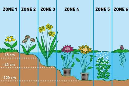 Zones - moerings - plantplezier - ivo - vijverplanten