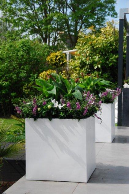 Kleur je leven - rob - plantplezier - potten
