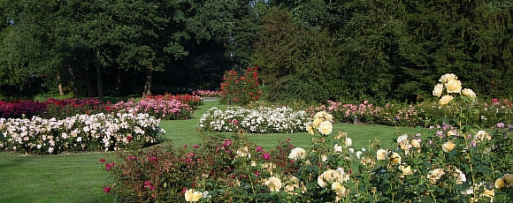 Rosarium - rozen - plantplezier