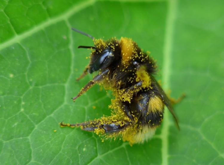 bijen - plantplezier - trots op - kindertuin