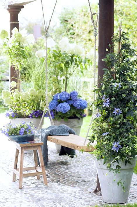 passiebloem - plantplezier - terrasplant - mei