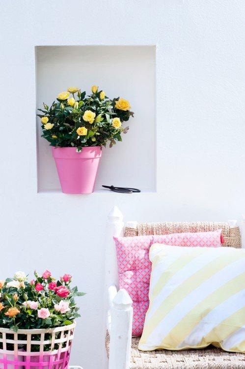 Roos - plantplezier