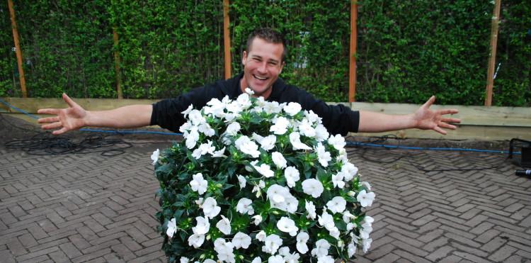 Wit in je tuin - PlantPlezier.nl
